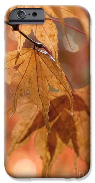 Close Focus Nature Scene iPhone Cases - Autumn Acer iPhone Case by Anne Gilbert