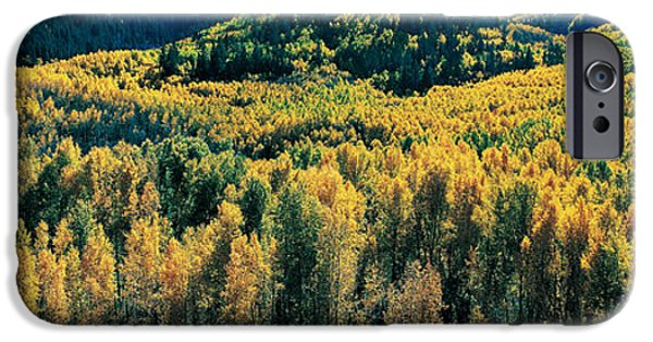 Mountain iPhone Cases - Autumn Aspens, Colorado, Usa iPhone Case by Panoramic Images