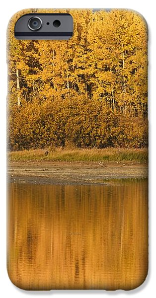 Autumn Aspens Reflected In Snake River iPhone Case by David Ponton