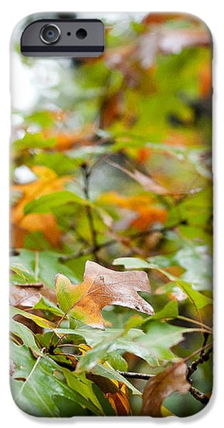 Autumn iPhone Case by Barbara Shallue