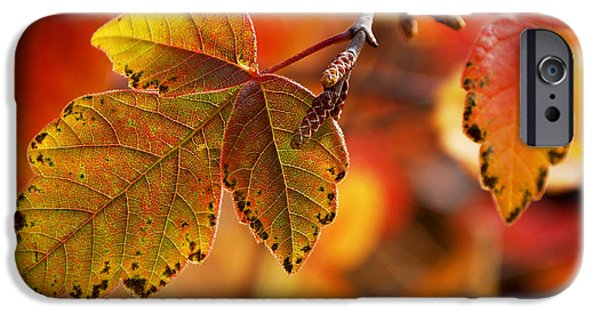 Becky Photographs iPhone Cases - #autumn iPhone Case by Becky Furgason