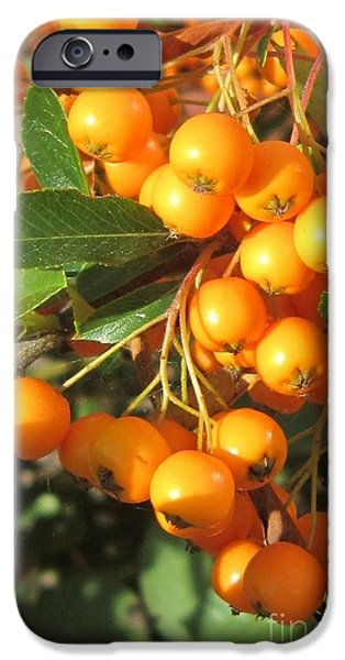 Berry iPhone Cases - Autumn Berries Pyracantha iPhone Case by John Clark