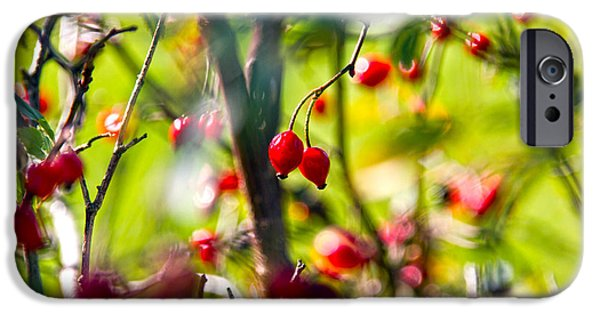 Rosaceae iPhone Cases - Autumn Berries  iPhone Case by Stylianos Kleanthous