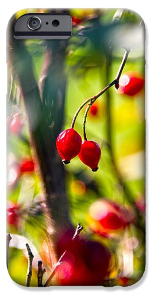 autumn berries  iPhone Case by Stylianos Kleanthous