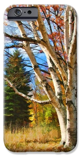 Autumn Foliage iPhone Cases - Autumn Birch iPhone Case by Christopher Arndt