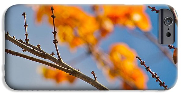 Autumn iPhone Cases - Autumn Blossoms iPhone Case by Shelby  Young
