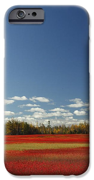 Autumn Blueberry Field Maine iPhone Case by Scott Leslie