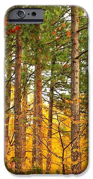 Autumn Canvas iPhone Case by Carol Groenen
