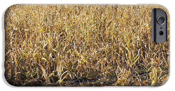 Corn iPhone Cases - Autumn Cattle Silage Corn In Maine iPhone Case by Keith Webber Jr