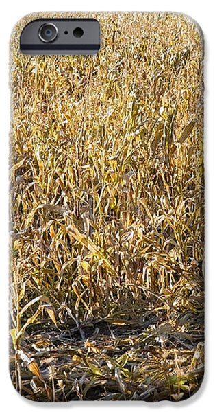 Autumn Cattle Silage Corn In Maine iPhone Case by Keith Webber Jr