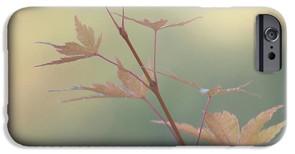 Leaf Change iPhone Cases - Autumn Changes iPhone Case by Angie Vogel