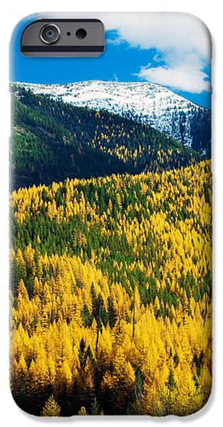 Snowy Day iPhone Cases - Autumn Color Larch Trees In Pine Tree iPhone Case by Panoramic Images
