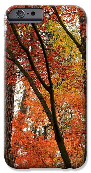 Beautiful Autumn Day iPhone Cases - Autumn Color Revival iPhone Case by Carol Groenen