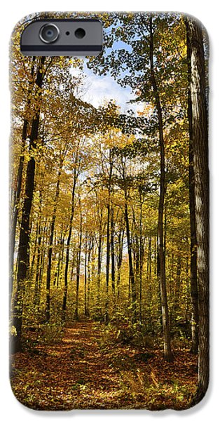 Autumn Landscape Pyrography iPhone Cases - Autumn colors iPhone Case by Cornel Iacobuta