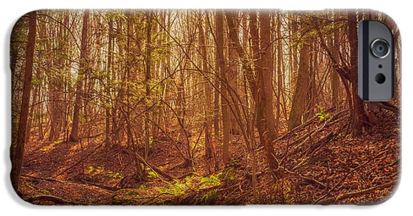 Oak Creek iPhone Cases - Autumn Dry Creek iPhone Case by Chris Bordeleau