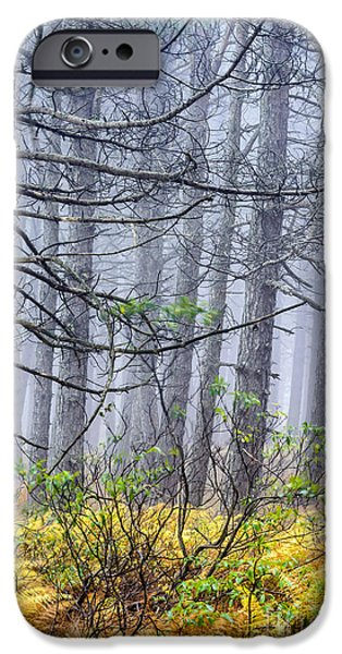 Sod iPhone Cases - Autumn Fog Dolly Sods Wilderness iPhone Case by Thomas R Fletcher