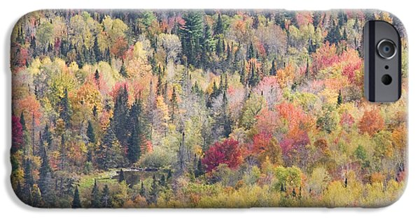 Maine Landscape iPhone Cases - Autumn Forest Landscape In Mount Blue State Park Weld Maine iPhone Case by Keith Webber Jr