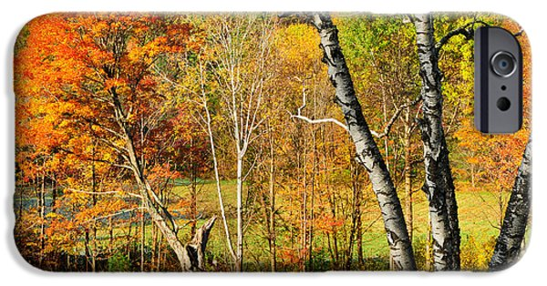 Massachusetts Autumn Scenes iPhone Cases - Autumn Forest scene - Litchfield Hills iPhone Case by Thomas Schoeller