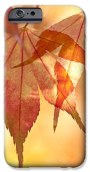 Autumn Glow iPhone Case by Anne Gilbert