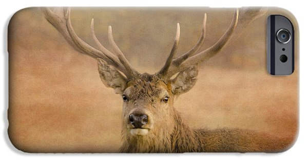 Wild Animals iPhone Cases - Magnificant Stag iPhone Case by Linsey Williams