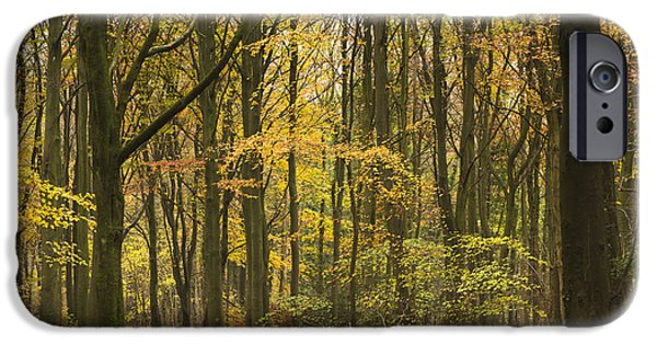 Pathway iPhone Cases - Autumn Gold iPhone Case by Anne Gilbert
