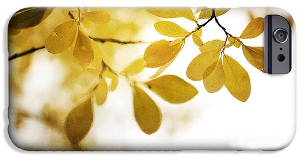 Fall Season iPhone Cases - Autumn Gold iPhone Case by Priska Wettstein