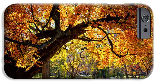 Boston iPhone Cases - Autumn Gold iPhone Case by TexJames Photography