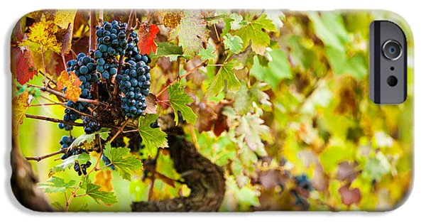Chianti iPhone Cases - Autumn Grape Harvest Season iPhone Case by Susan  Schmitz