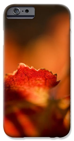 Autumn Grape Leaf Macro iPhone Case by Charmian Vistaunet