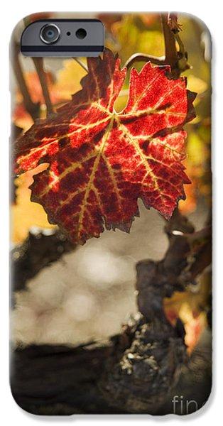 Autumn Grape Leaves iPhone Case by Charmian Vistaunet