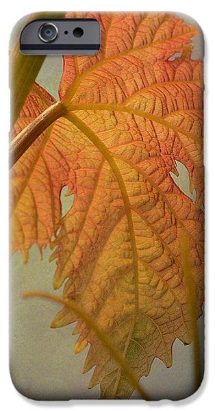 Autumn Grapevine iPhone Case by Fraida Gutovich