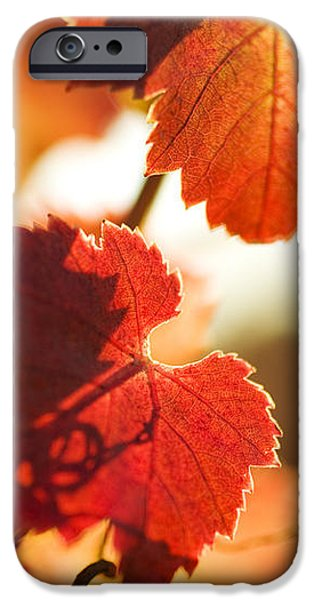 Autumn Grapevine Leaves iPhone Case by Charmian Vistaunet