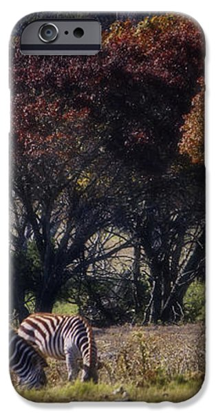 Autumn Grazing iPhone Case by Joan Carroll