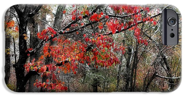 Fall Scenes iPhone Cases - Autumn Harmony iPhone Case by Michael Eingle