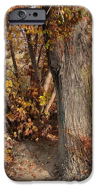 Fall Scenes iPhone Cases - Autumn Hideaway iPhone Case by Carol Groenen