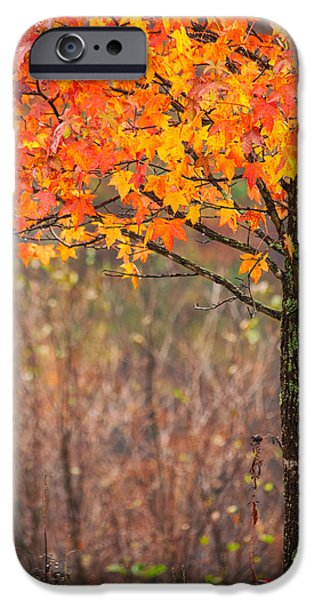 Fall In New England iPhone Cases - Autumn In Connecticut iPhone Case by Karol  Livote