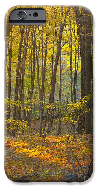 Autumn Foliage Photographs iPhone Cases - Autumn in New England iPhone Case by Diane Diederich
