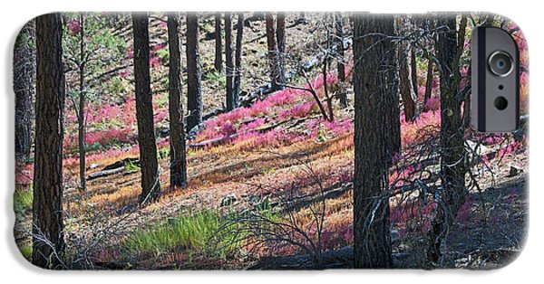 Prescott Digital iPhone Cases - Autumn in the Bradshaw Mountains 2 iPhone Case by Phil Balcastro