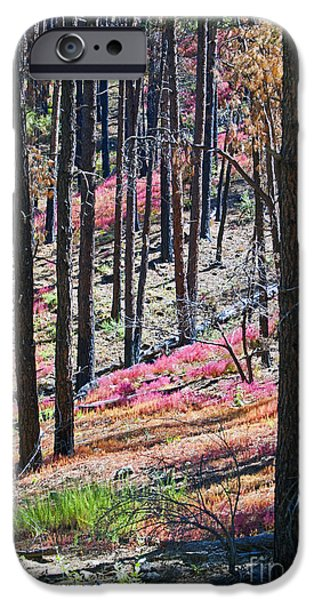 Prescott Digital iPhone Cases - Autumn in the Bradshaw Mountains  iPhone Case by Phil Balcastro