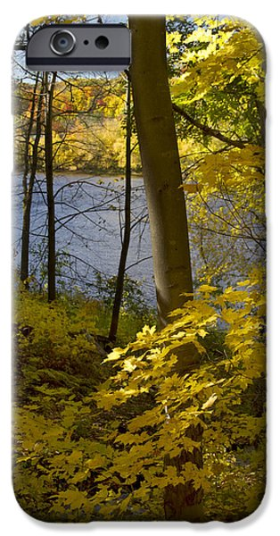 Forest Pyrography iPhone Cases - Autumn in the St Croix River Valley iPhone Case by Garry McMichael