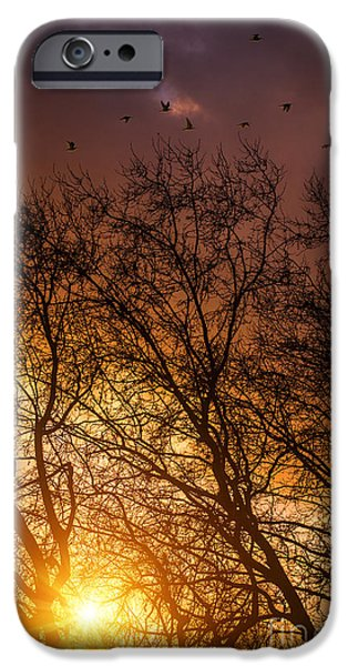 Fall iPhone Cases - Autumn Landscape iPhone Case by Carlos Caetano