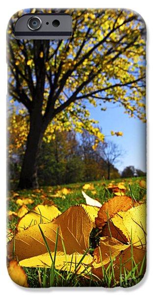 Autumn iPhone Cases - Autumn landscape iPhone Case by Elena Elisseeva
