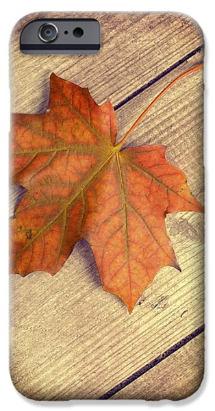 Autumn Leaf iPhone Case by Amanda And Christopher Elwell