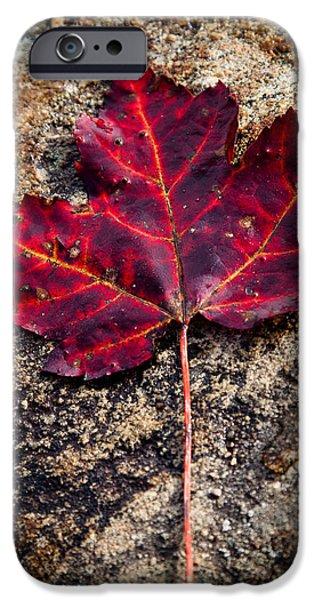 Surreal Landscape iPhone Cases - Autumn Leaf iPhone Case by David Patterson