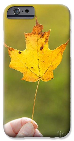 Autumn Foliage Photographs iPhone Cases - Autumn Leaf iPhone Case by Diane Diederich
