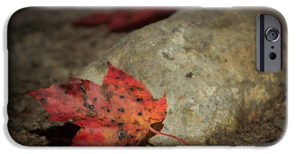 New Hampshire Fall Scenes iPhone Cases - Autumn leaf project iPhone Case by Chris Fletcher