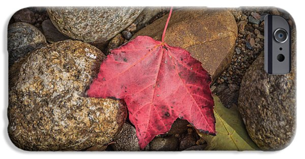 White Mountains iPhone Cases - Autumn leaf project No.6 iPhone Case by Chris Fletcher