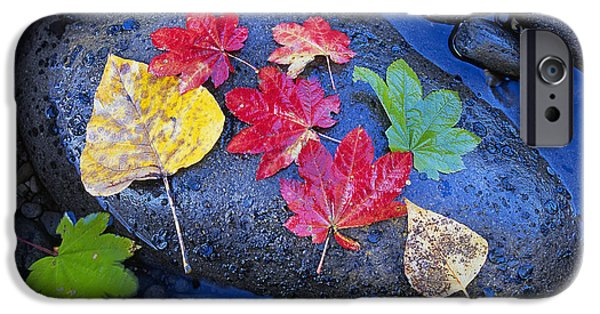 Fallen Leaf On Water iPhone Cases - Autumn Leaves iPhone Case by Buddy Mays