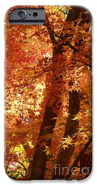 Autumn Leaves iPhone Case by Carol Groenen