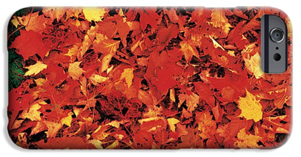 Forest Floor iPhone Cases - Autumn Leaves Great Smoky Mountains iPhone Case by Panoramic Images